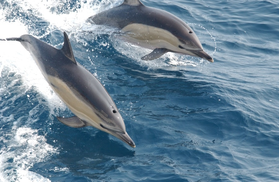 DOLPHIN CONSERVATION IN AUSTRALIA