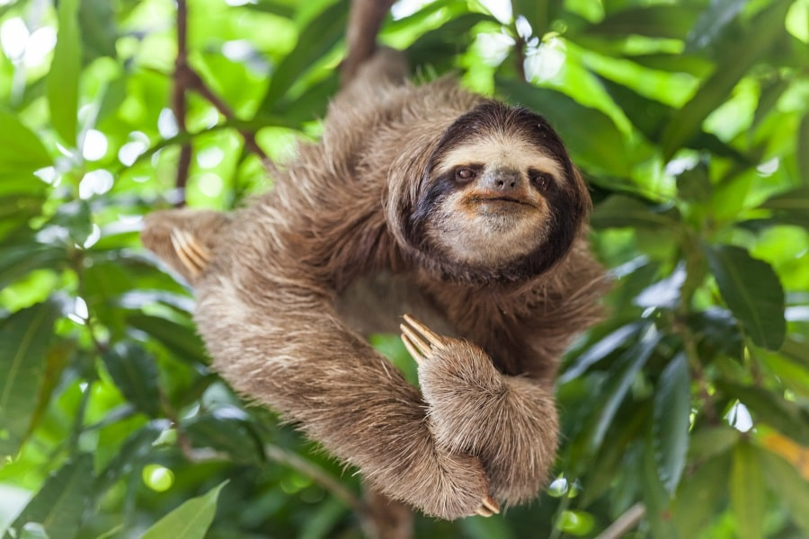 CONSERVATION OF SLOTHS