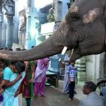 Elephant Manakula Vinayagar temple Pondicherry