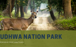 Dudhwa Nation Park and Tiger Reserve